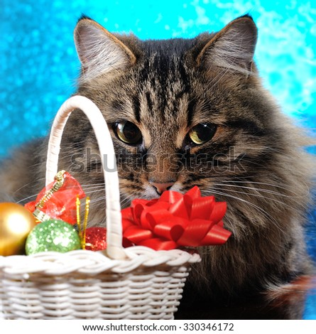cat with christmas decoration on blue background - stock photo