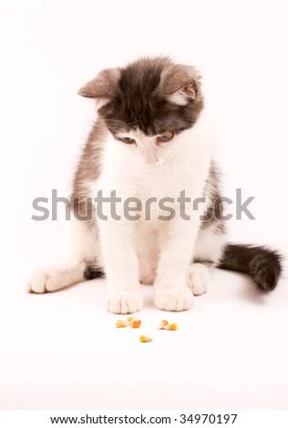 Cat with corn - stock photo