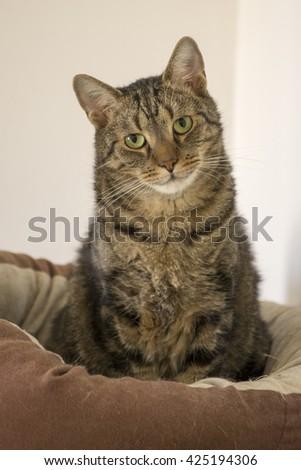 Cat with dog eyes - stock photo