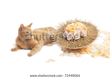 Cat with flower bouquet on white.