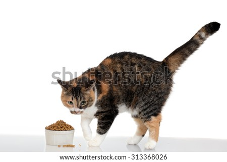 cat with food in bowl - stock photo