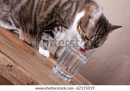 Cat with glass of water on table - stock photo