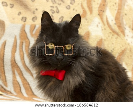 cat with glasses and tie - stock photo