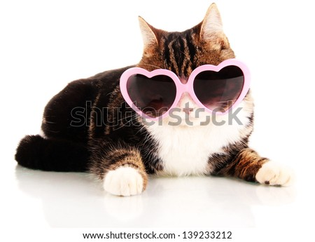cat with glasses isolated on white - stock photo