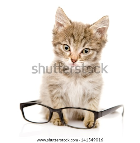 cat with glasses. looking at camera. isolated on white background - stock photo