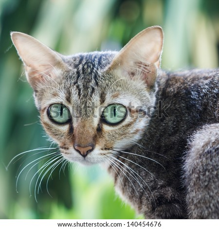 Cat with green eyes are staring at the camera. - stock photo