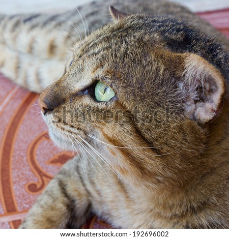 Cat with green eyes looking for. - stock photo