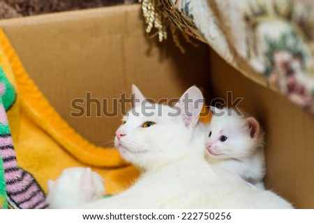 cat with kittens - stock photo