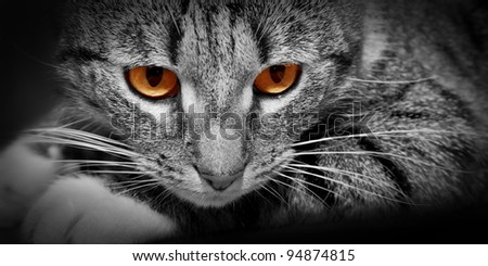 Cat with mysterious scary red glowing eyes. Conceptual