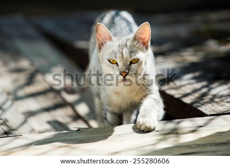 Cat with narrowed eyes walking on the wooden stairs near the street in sunlight. Partly unfocused. - stock photo
