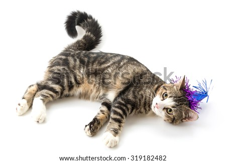 cat with party hat on white background
