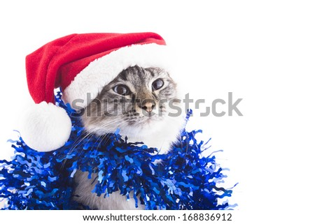 Cat with Santa Claus hat and tinsel isolated on white background. Blue eyes - stock photo