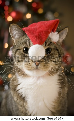 Cat with Santa Claus red hat looking at camera - stock photo
