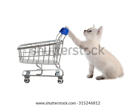 Cat with shopping cart. isolated - stock photo