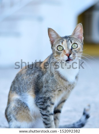 Cat with suprised look