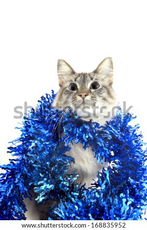 Cat with tinsel isolated on white background. Christmas card