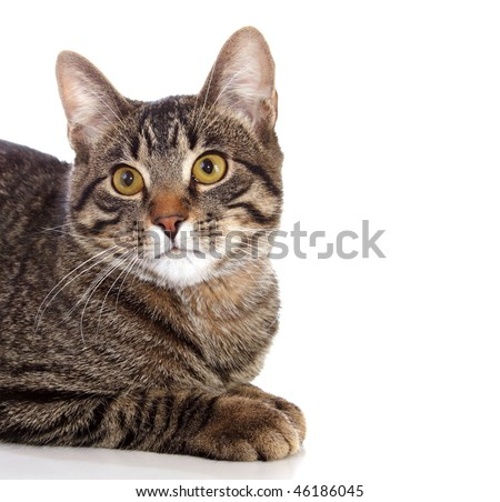 Cat with white space