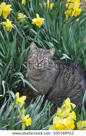 Cat with yellow flowers in garden - stock photo