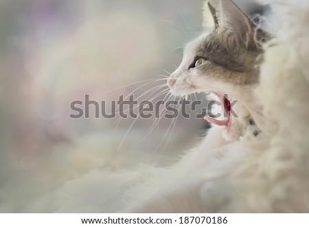 Cat yawns. Good morning ! ! ! - stock photo