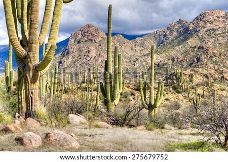Catalina Mountain State Park near Tucson. - stock photo