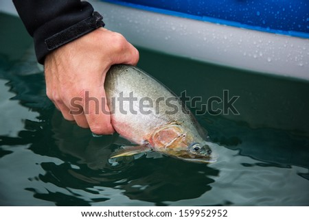 Catch and Release of Lake Trout - stock photo