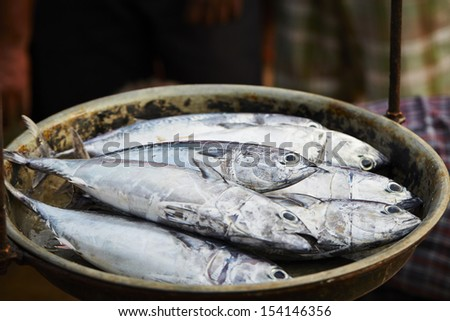 Catch on the traditional fish market in Sri Lanka - selective focus