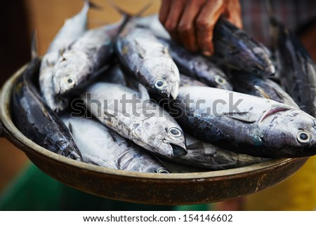 Catch on the traditional fish market in Sri Lanka - selective focus - stock photo