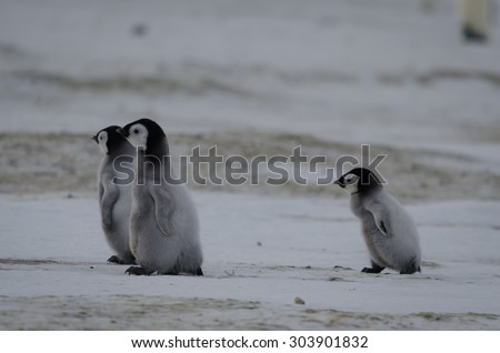 catch up penguin chick