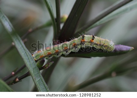 Caterpillar - stock photo