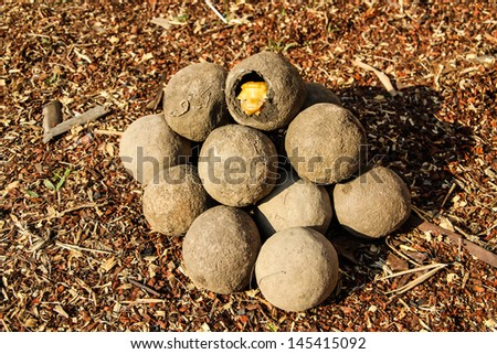 caterpillar insect earth ball in country side of Laos - stock photo