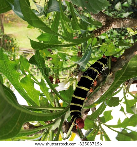 caterpillar on a tree - stock photo