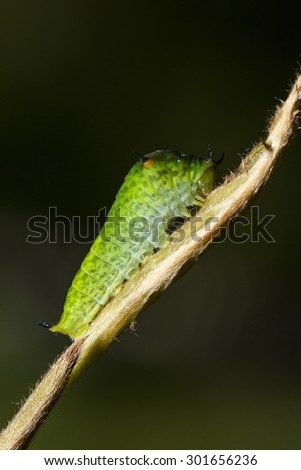 caterpillar on leaf stem in garden