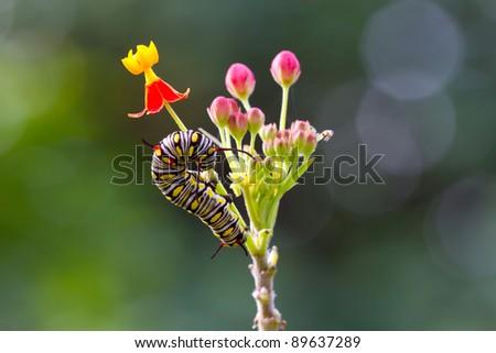caterpillar on the flower - stock photo