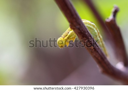 Caterpillar perched on a branch .