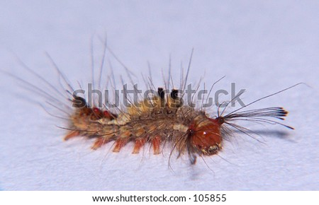 Caterpillar : side view - stock photo