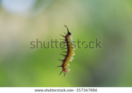Caterpillar suspended by a web