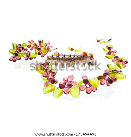 Caterpillar with the fruity glass jewelry on the white background shot in the studio - stock photo