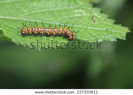 Caterpillars on a green leaf - stock photo