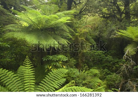 Catlins, Southland, Rainforest, river flowing through lush temperate rainforest with different kinds of ferns and trees, New Zealand - stock photo