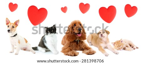 Cats and dogs with red hearts isolated on white - stock photo