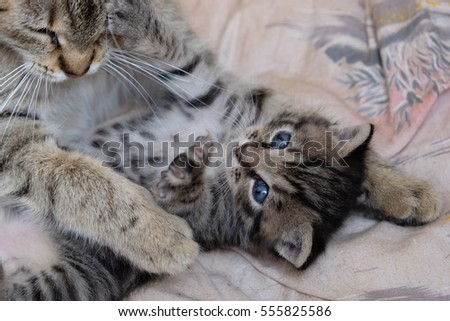 Cats fight - mother and child