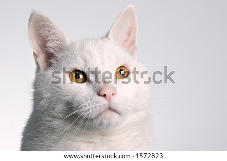 Cats head on white