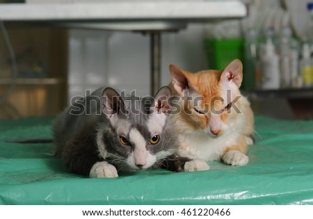 Cats in animal hospital