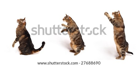 Cats in differentpositions on white background - stock photo