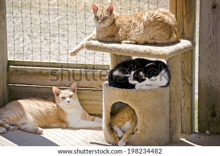 cats napping in the afternoon sun in an enclosed area - stock photo