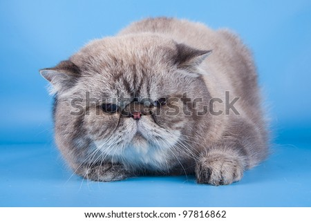 Cats on the blue background - stock photo