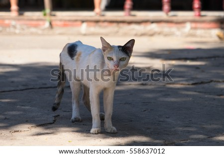 Cats on the streets of Thailand