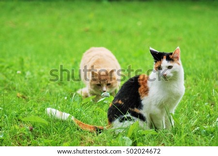 Cats playing in the grass