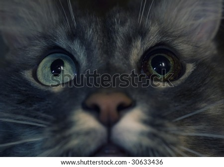 cats prying eyes