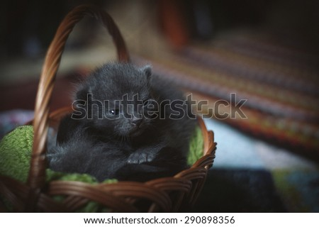 Cats sleeping in the basket - stock photo